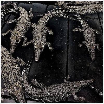 Reptiles Wall Art - Photograph - ... Future Gucci Handbags ... Hartleys by Brian Cassey