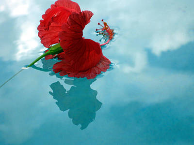 Photograph -  Hibiscus Reflections by Sarah Hornsby