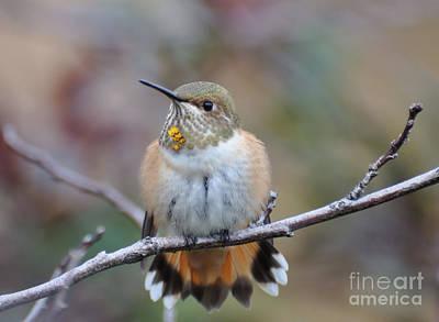 Hummingbird Stretch Six Art Print