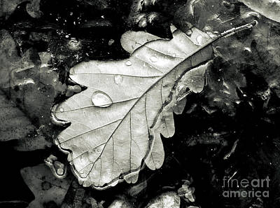 Iceflower Photograph -   by Odon Czintos