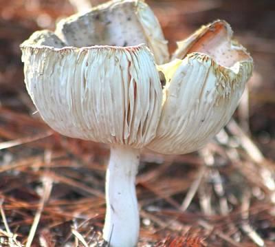 Photograph -  Orange Mushroom Aging by Jeanne Kay Juhos