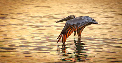 Pelican At Sunset Art Print