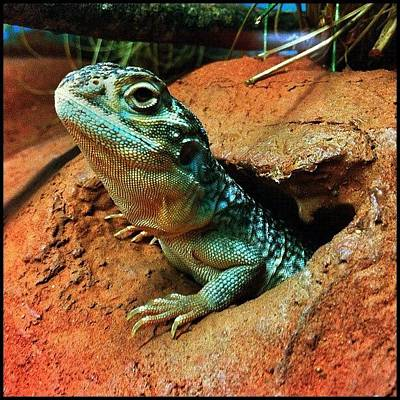 Dragon Photograph - ... Pic 2 From Today At Cairns Tropical by Brian Cassey
