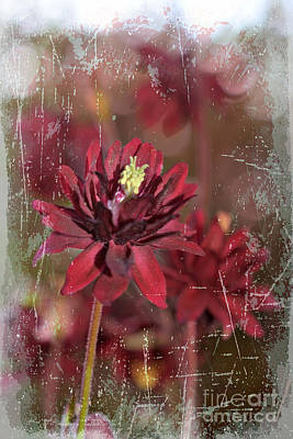 I Got Your Back Photograph -  Red Flower by Lila Fisher-Wenzel