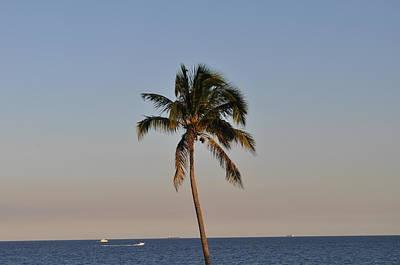 Sea Watch Palm Art Print