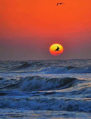 Photograph -  Seagulls Silhouetted by Emily Stauring