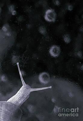 Snail In Ice Art Print by Odon Czintos