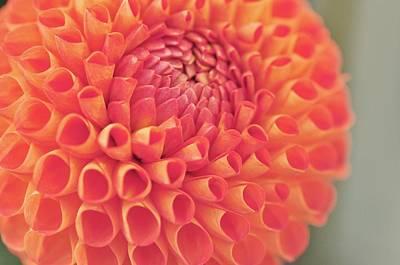 Photograph -  Snoho Jo Jo  by Puzzles Shum