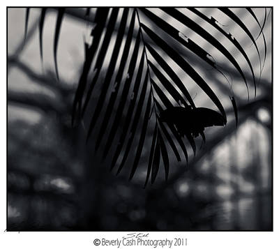 Photograph -  Still - Butterfly Silhouette by Beverly Cash