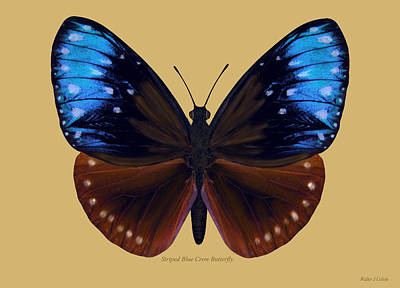 Digital Art -  Striped Blue Crow Butterfly by Walter Colvin