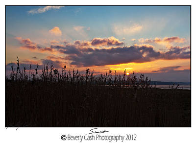 Photograph -  Sunset Grasses by Beverly Cash
