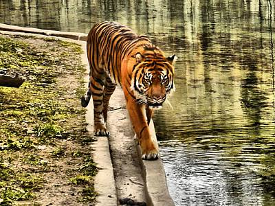 Animals Photos -  The Tiger by Anthony Walker Sr