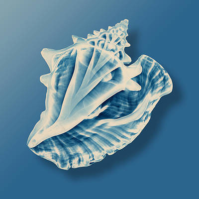 Photograph -  X-ray Of A Conch Shell by Mark Greenberg