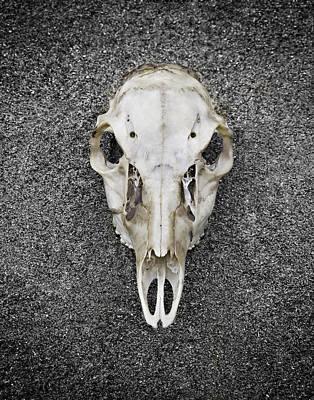 0710-0099 Deer Skull On The Buffalo River Art Print