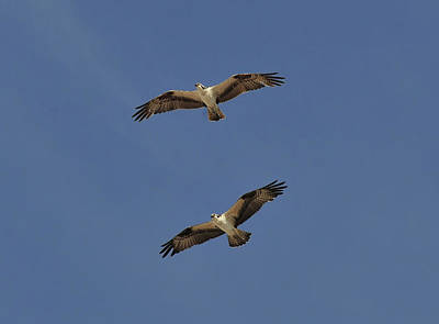 Photograph - A Beautiful Pair by David Lee Thompson