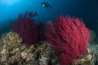 Photograph - A Diver Looks On At A Colorful Reef by Steve Jones