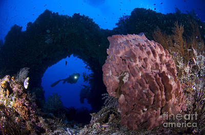 Photograph - A Diver Looks On At A Giant Barrel by Steve Jones
