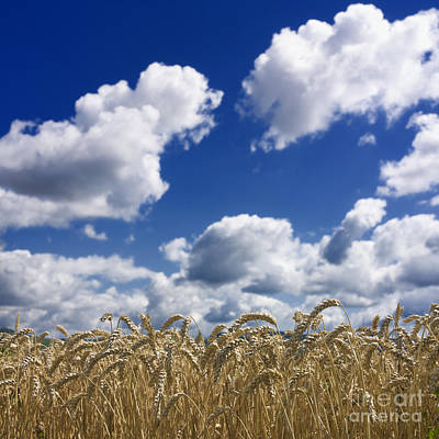 A Field Of Wheat Auvergne. France Art Print by Bernard Jaubert