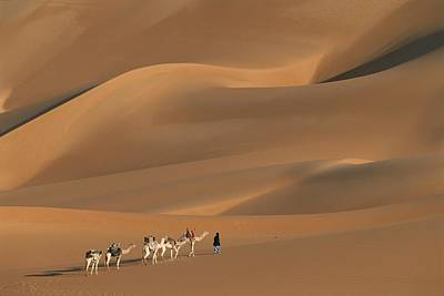 A Tuareg Tribesman Leads His Camels Art Print