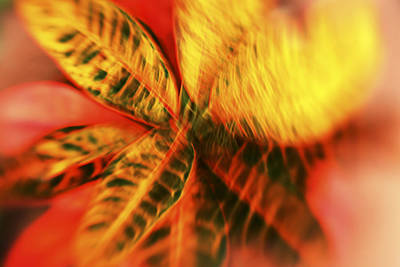 Abstract Croton Plant Art Print