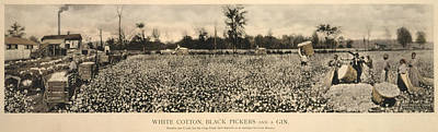 Cotton Picking Photograph - African Americans Working In A Cotton by Everett