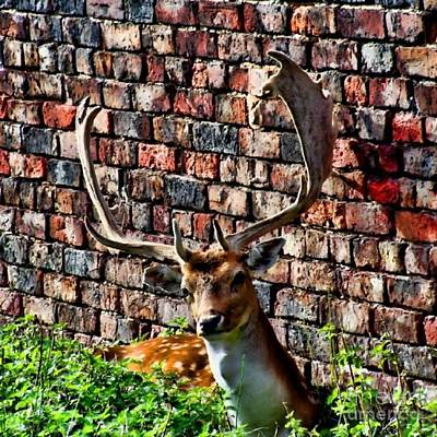 Wildlife Photograph - Against The Wall by YoursByShores Isabella Shores