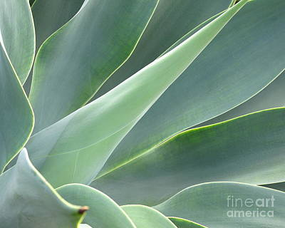 Art Print featuring the photograph Agave by Ranjini Kandasamy