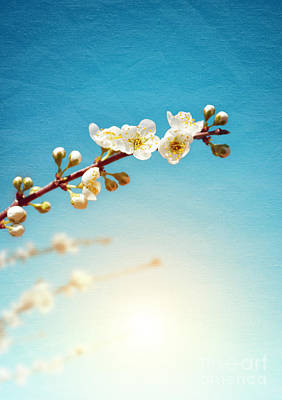 Floral Photograph - Almond Branch by Carlos Caetano