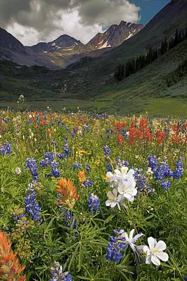 Alpine Flowers In Rustler's Gulch, Usa Art Print by Bob Gibbons
