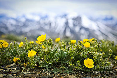 Whistler Photograph - Alpine Meadow In Jasper National Park by Elena Elisseeva