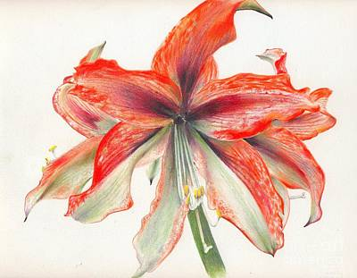 Painting - Amaryllis by Penrith Goff