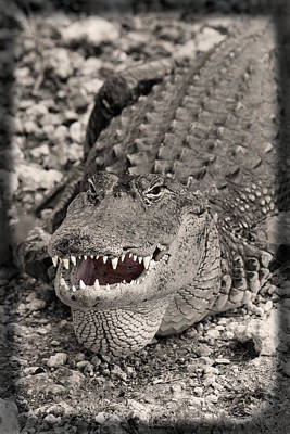 Hiding Photograph - American Alligator by Rudy Umans