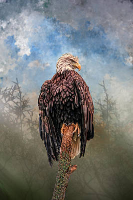 Digital Art - American Bald Eagle by Mary Almond