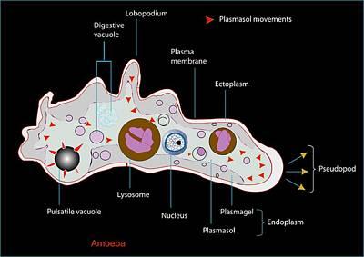 Ectoplasm Photograph - Amoeba, Artwork by Francis Leroy, Biocosmos