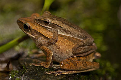 Photograph - Amplexus by Zoe Ferrie