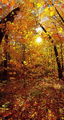 An Autumn Walk Print by Phil Koch