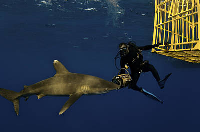 Cage Diving Photograph - An Oceanic Whitetip Shark Swims by Brian J. Skerry