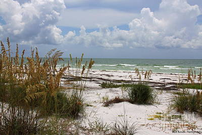 Photograph - Anclote Key Preserve by Barbara Bowen
