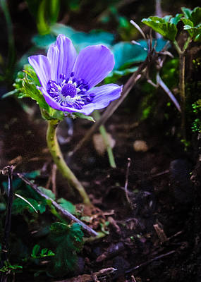 Photograph - Anemon by Michael Goyberg