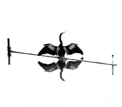 Anhinga Wall Art - Photograph - Anhinga by Jim Wright