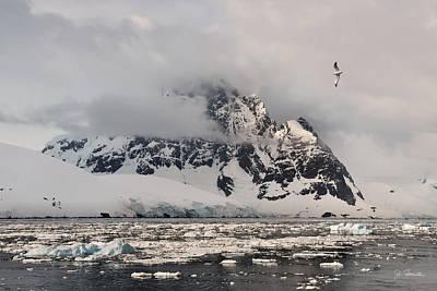 Photograph - Antarctic No. 11 by Joe Bonita