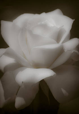 Photograph - Antique Romantic Rose by Peggie Strachan