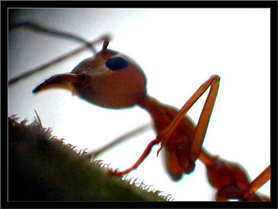 Photograph - Ants18 2008 by Glenn Bautista