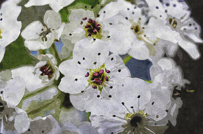 Digital Art - Apple Blossoms by Charles Muhle