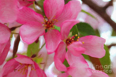 Digital Art - Apple Blossoms by Donna Munro