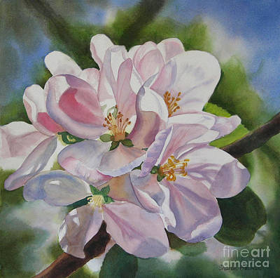 Apple Watercolor Painting - Shadowed Apple Blossoms by Sharon Freeman