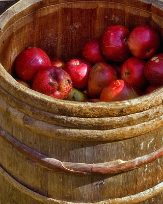 Harvest Photograph - Apple Harvest by Joann Vitali