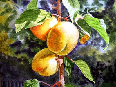 Fruit Tree Art Painting - Apricots In The Garden by Irina Sztukowski