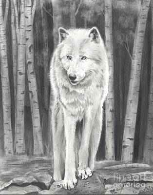 Drawing - Arctic Wolf by Christian Conner