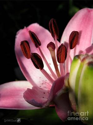 Photograph - Asiatic Lily Named Vermeer by J McCombie